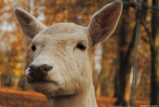 white goat in the forest by aaandra