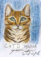 Cat Sketch Coloured by Loucathwil