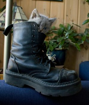 Kitten Shoe by RandomResources