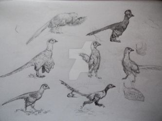 Basal paravian sketches by Lucas-Attwell