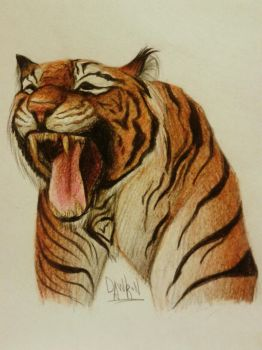 Tiger's Roar by Dawron