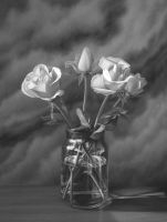 Roses still life by StephenAinsworth