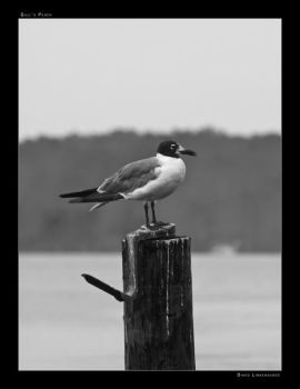 Gull's Perch by linkf1