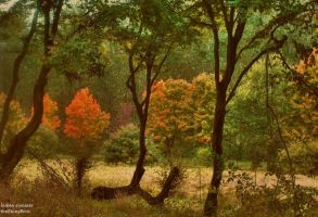Indian summer by Fall-Leaves-Club