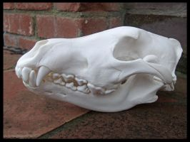 Wolf Skull by Lupen202