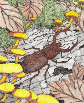 Elephant Stag Beetle by WiccaSmurf