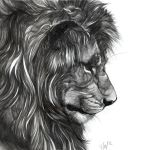 Washes and Lions by Novawuff