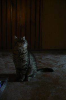 my cat 2 by MyDreamss