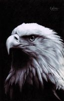 American Eagle by LencreDeRouge08