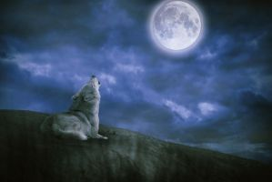 Wolf On Cliff by m2photogmel