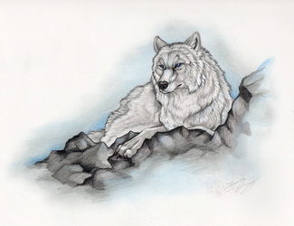 White Wolf by Gray-Ghost-Creations