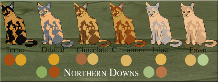 Tortoiseshell Coloration Guide by NorthernDowns