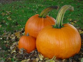 The Pumpkin Family 1600x1200 by euphoricallydead
