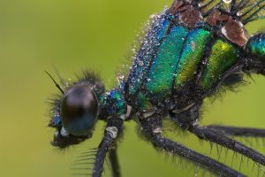 Damselfly by MartinAmm