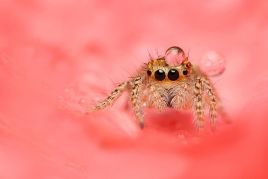 Scary Spider by evirgen2008