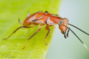 Cockroach by ColinHuttonPhoto