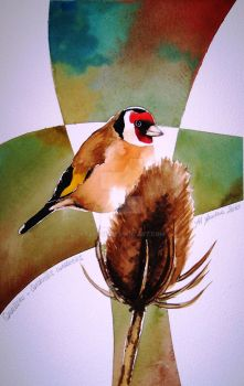 Eurasian Goldfinch by flysch