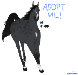 HORSE ADOPT - NAME YOUR PRICE by animalover501