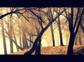 Misty Morning 11 - Sun and mist! Gold spring. by etr-wroclove