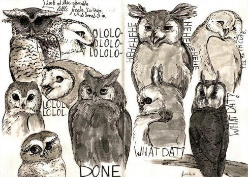 Sassy Owls the First by ArtmadebyRed
