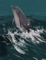 Dolphin by TheWitchesBrew