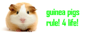 guinea pigs rule by oaamiwolf