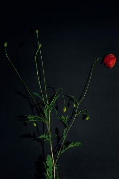 Still Life by cleverless