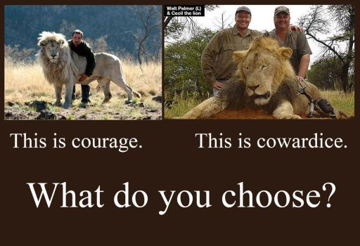 About Cecil the lion and trophy hunters by hontor