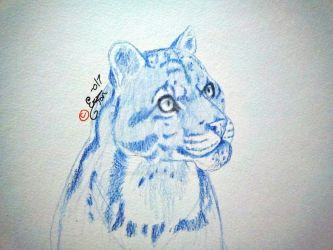 Clouded Leopard: colored pencil by ValsparinDragon
