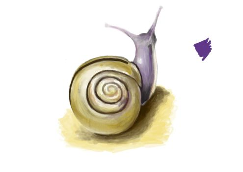 Snail Study by RisetoFall