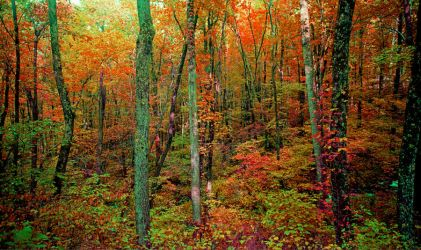 Forest.img541 by harrietsfriend