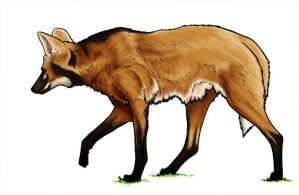 Maned Wolf by daidaishar