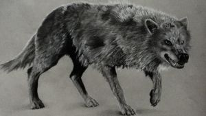 Wolf (Color Pencil) by AlphaWolf209x