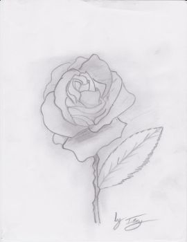 rose by 12Issy