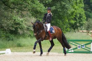 Lusitano Dressage Training Trot Stock by LuDa-Stock