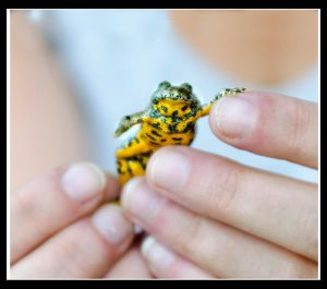 May I introduce, Le frog by Phototubby