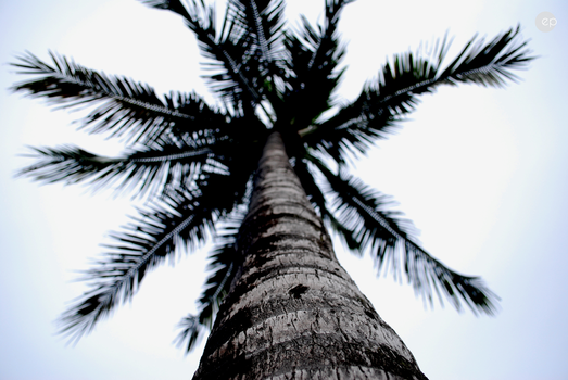 The Palm by eliaselhage02