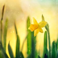 Day 37 - Sign of spring by EliseEnchanted