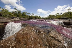 Cano Cristales Meta Colombia by DanteBw