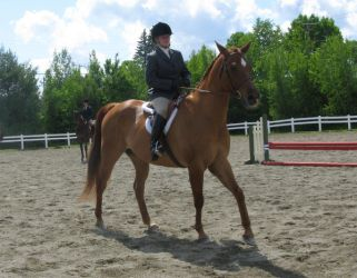 English 17 by vorbei-horse-stock