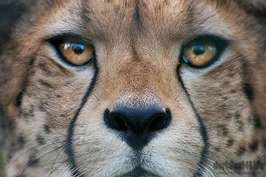 Stare into my eyes.. by darkSoul4Life
