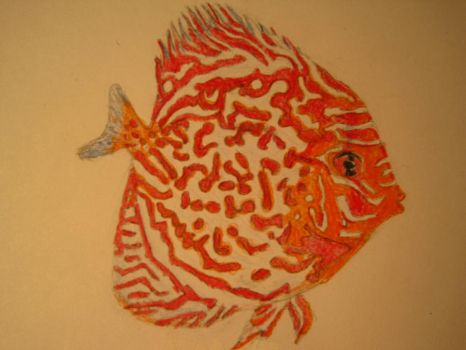 fish by maggie14and1