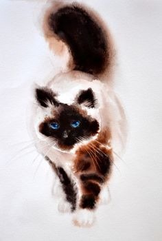 Himalayan cat by Verenique