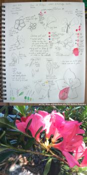NHI101x - 4.4 Flower Drawing Assessment by AmaranthineRain