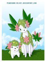 SHAYMIN POSE FOR THE PHOTO
