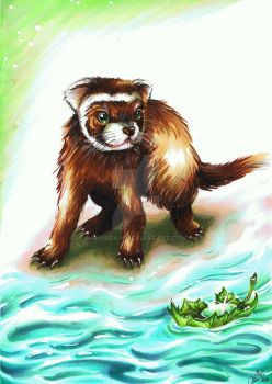 Ferret on the water... by Mahira-K