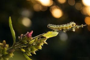 caterpillar 2 by artmobe