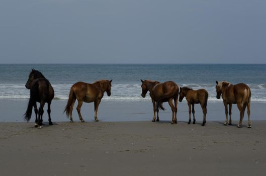 More wild horses by The-7ank