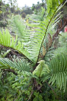 Cycad by Quit007