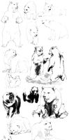 Bears practice by Charneco